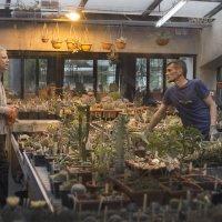 Продавец кактусов :: Жанна Турлаева