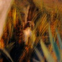 Глаза котенка в ночи :: Светлана