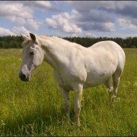 Белая лошадь :: lady v.ekaterina