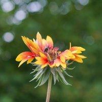 Цветок и букашка :: Андрей Майоров