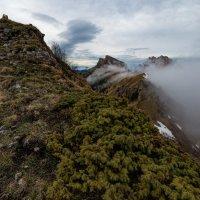 Можжевельник и туман в горах :: Александр Плеханов