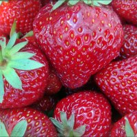 Сладкие ягодки :: Нина Корешкова