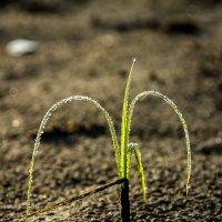 Травы .  Встречая Солнце :: Алексей (АСкет) Степанов