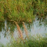 неизвестная птичка :: Иннокентий Авдонин