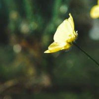 цветы :: Рамиль Ахметов