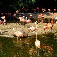 Фламинго :: Nina Yudicheva