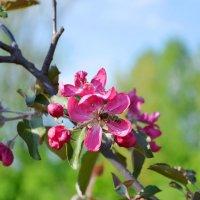 весеннее цветение :: Надежда Миронова