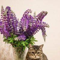 Кот и люпины :: Elena Ignatova