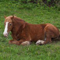 Грустный конь :: Алексей Шаповалов Стерх