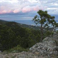 елка в скале :: Никита Волосянов