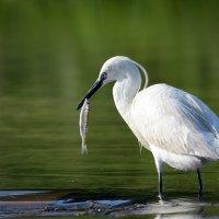 Ловись рыбка большая и маленькая. :: Светлана Ивановна Медведева