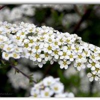 Весны творение :: Василий Хорошев