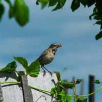 .Кормящие птахи :: Валерий Жалабкевич