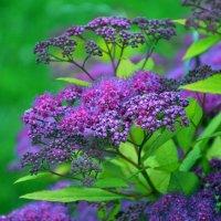Незвичайна квітка :: Ирина Божко