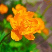 Из жизни цветов :: Анатолий Иргл