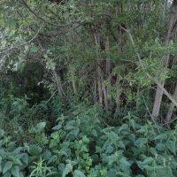В Прикамских лесах :: Валерий Конев