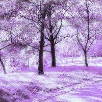 Парк в Infrared :: Татьяна Каримова