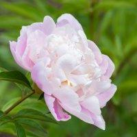 Подскажите название цветка :: Alex Bush