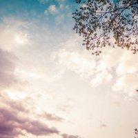 Небо :: Timofey Chichikov