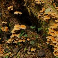 Плантация грибов :: Larisa Freimane