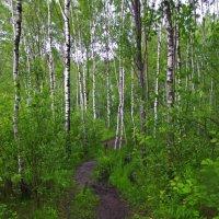 Тропинка в лесу. :: Ирина Нафаня