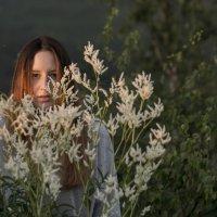 summer :: Dmitry Ozersky