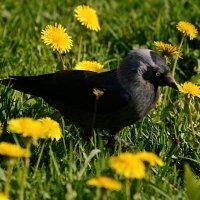 среди цветов :: linnud