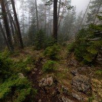 В тумане леса :: Александр Плеханов