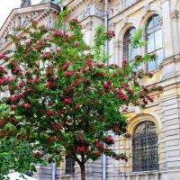 дерево в цвету :: Алла Лямкина