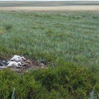 Гнездо степного орла :: Александр Никишков