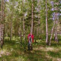 В смешанном лесу. :: Мила Бовкун