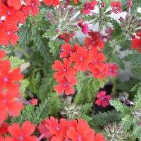 Flower :: Sony 2 Sony 2