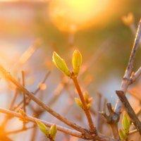 Весна :: Галина Борисова