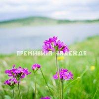 полевые цветы :: Надежда Преминина
