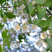 красиво цветет) :: Олеся Ушакова