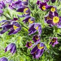 Весенние цветы :: Лариса Лунёва