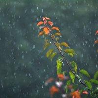Дождепад :: Петр Заровнев