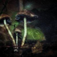 Под еловой лапой, у тропинки гномьей.. :: Ирина Сивовол