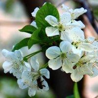Воспоминания о весне :: Светлана
