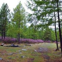 Дождь в лесу :: Ольга