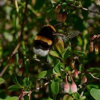 пчелка :: סּﮗRuslan HAIBIKE Sevastyanovסּﮗסּ