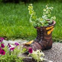 Летний сад. :: Геннадий Оробей