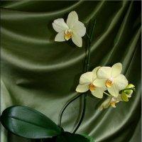 Орхидея :: °•●Елена●•° ♀
