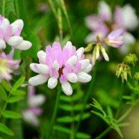 Полевые цветы :: Татьяна Евдокимова