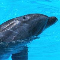 Дельфин :: Сергей Форос