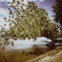 На озере :: Сергей. О