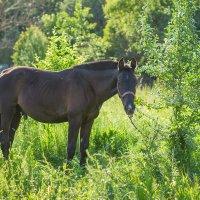 Конь пасется :: Анастасия