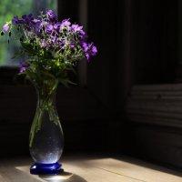 Какие-то самые простые цветочки :: Татьяна [Sumtime]