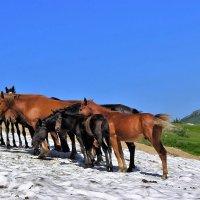 Лошади в горах :: Сергей Чиняев