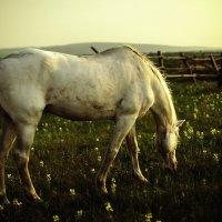 Лошадь на закате :: Павел Крутенко